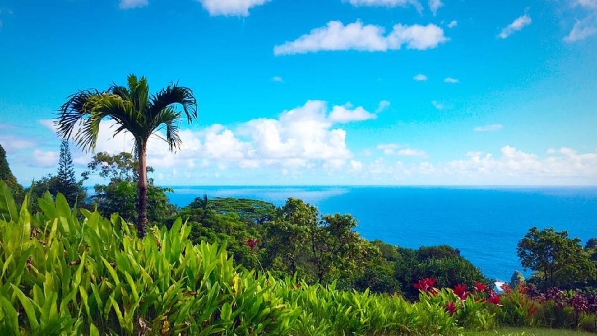 Hawaii! How the four of us traveled to Maui for less than $3,000